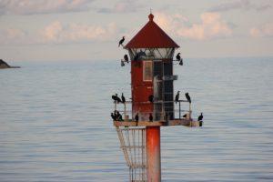 Seevögel am Leuchtfeuer bei Gedser in Dänemark